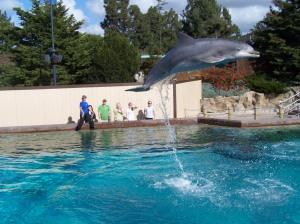 High flying dolphin, Deke