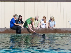 Tamara, Mom and I got to play with a dolphin